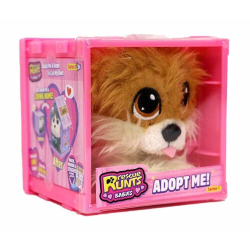 Rescue Runt Babies - Pomeranian